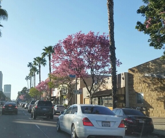 Heading Home on Ventura Blvd in Sherman Oaks, CA observations by a Relocation Realtor Endre Barath